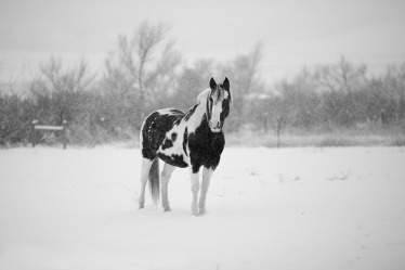 winter-1090649_960_720